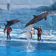 Eoasia ดีล : เที่ยว สวนสัตว์ ซาฟารีเวิลด์ สวนสัตว์ 1 วัน | กรุงเทพฯ